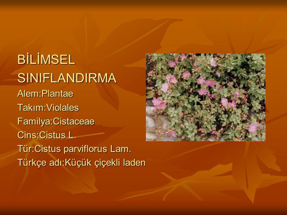 BİLİMSELSINIFLANDIRMAAlem:PlantaeTakım:ViolalesFamilya:Cistaceae Cins:Cistus L.