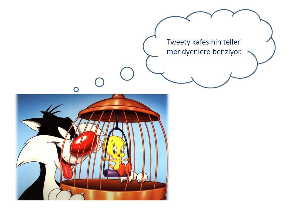 Tweety kafesinin telleri meridyenlere benziyor.