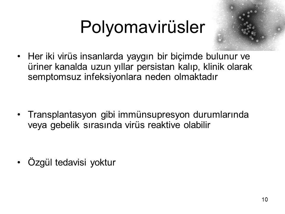 10 Polyomavirüsler Her iki virüs insanlarda yaygın bir biçimde bulunur ve üriner kanalda uzun yıllar persistan kalıp, klinik olarak semptomsuz infeksi