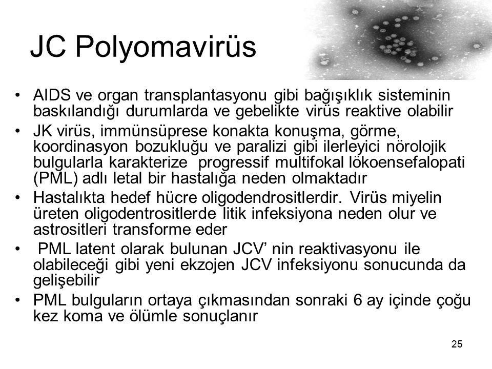 25 JC Polyomavirüs AIDS ve organ transplantasyonu gibi bağışıklık sisteminin baskılandığı durumlarda ve gebelikte virüs reaktive olabilir JK virüs, im