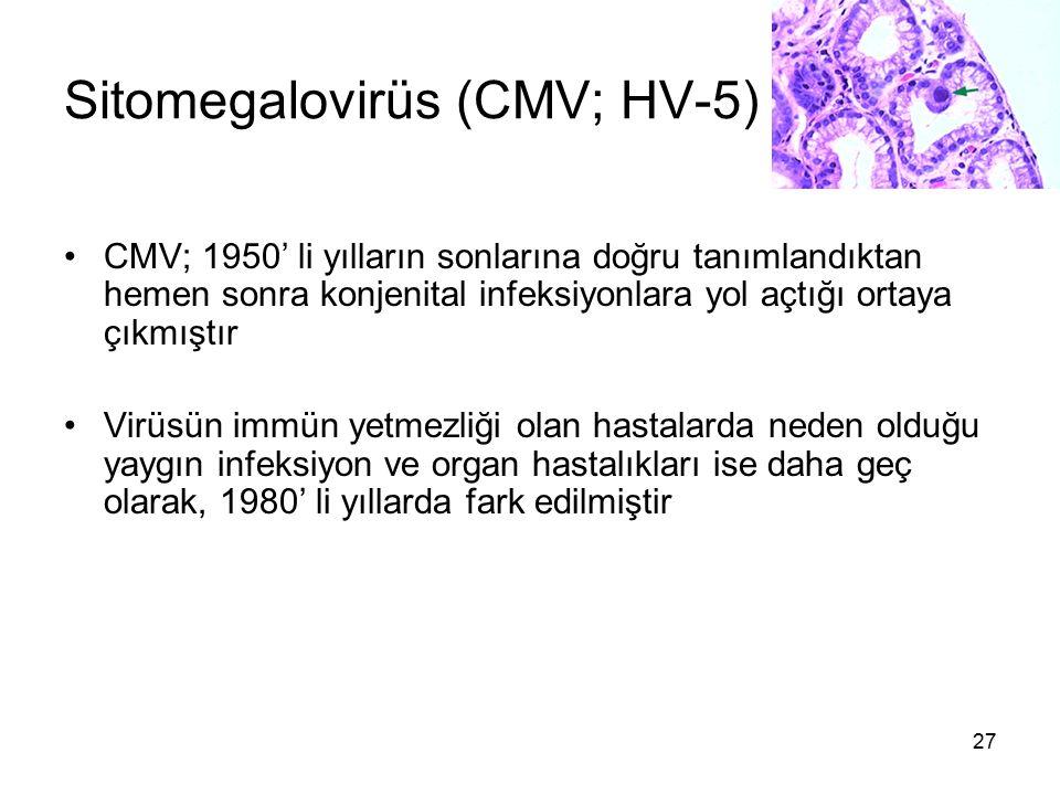 27 Sitomegalovirüs (CMV; HV-5) CMV; 1950' li yılların sonlarına doğru tanımlandıktan hemen sonra konjenital infeksiyonlara yol açtığı ortaya çıkmıştır
