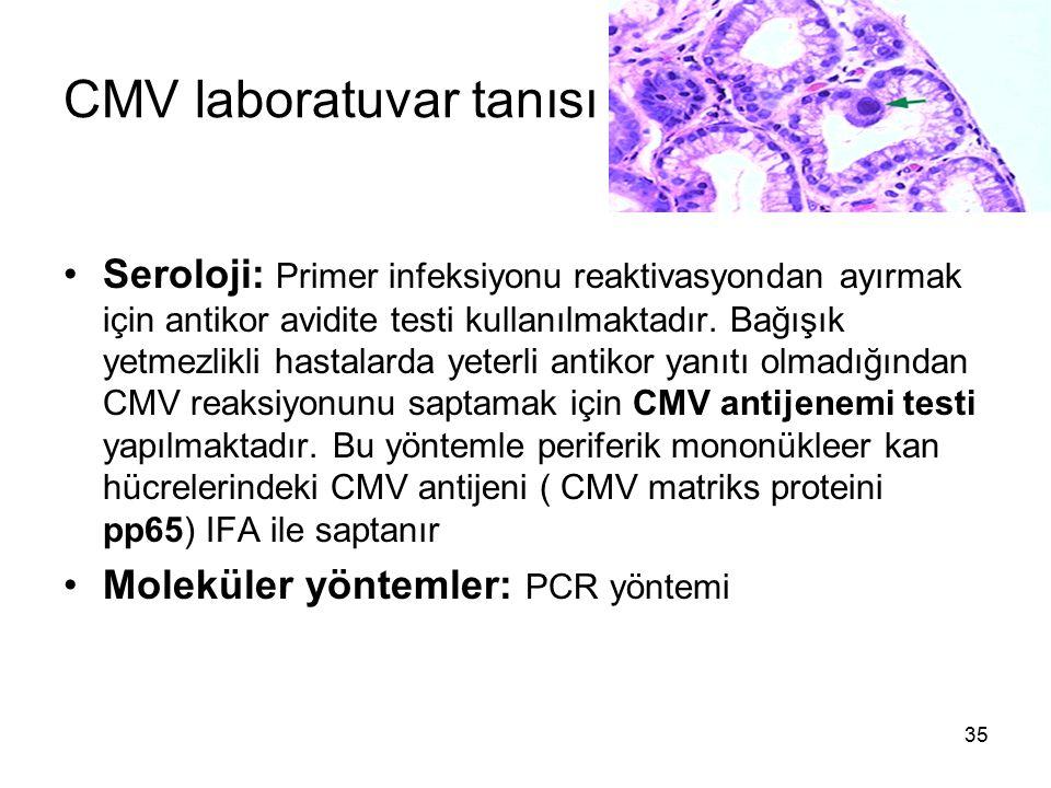35 CMV laboratuvar tanısı Seroloji: Primer infeksiyonu reaktivasyondan ayırmak için antikor avidite testi kullanılmaktadır. Bağışık yetmezlikli hastal