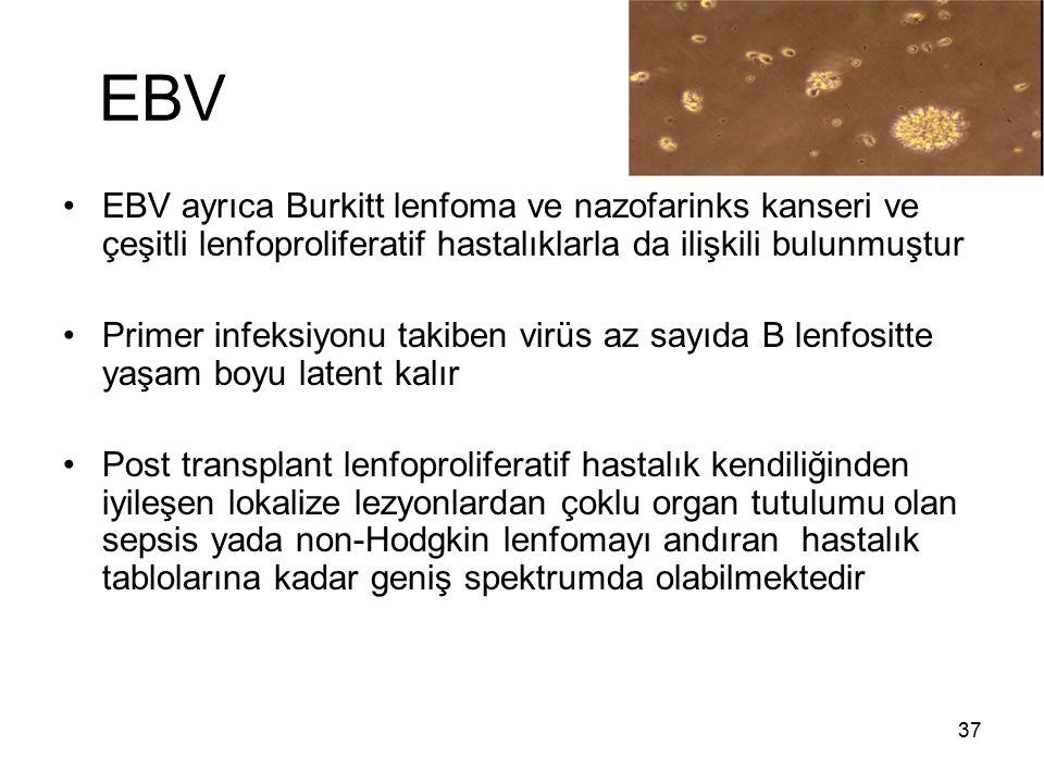 37 EBV EBV ayrıca Burkitt lenfoma ve nazofarinks kanseri ve çeşitli lenfoproliferatif hastalıklarla da ilişkili bulunmuştur Primer infeksiyonu takiben