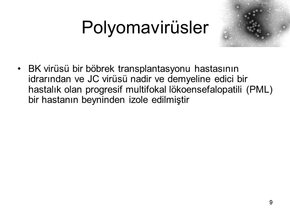 10 Polyomavirüsler Her iki virüs insanlarda yaygın bir biçimde bulunur ve üriner kanalda uzun yıllar persistan kalıp, klinik olarak semptomsuz infeksiyonlara neden olmaktadır Transplantasyon gibi immünsupresyon durumlarında veya gebelik sırasında virüs reaktive olabilir Özgül tedavisi yoktur