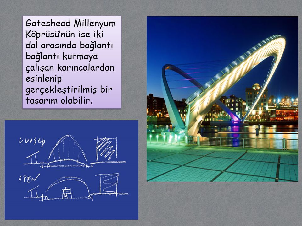 Gateshead Millenyum Köprüsü'nün ise iki dal arasında bağlantı bağlantı kurmaya çalışan karıncalardan esinlenip gerçekleştirilmiş bir tasarım olabilir.