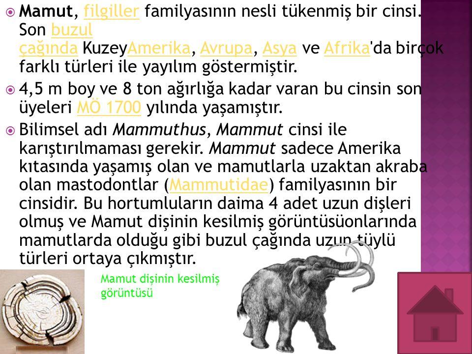  Mamut, filgiller familyasının nesli tükenmiş bir cinsi. Son buzul çağında KuzeyAmerika, Avrupa, Asya ve Afrika'da birçok farklı türleri ile yayılım