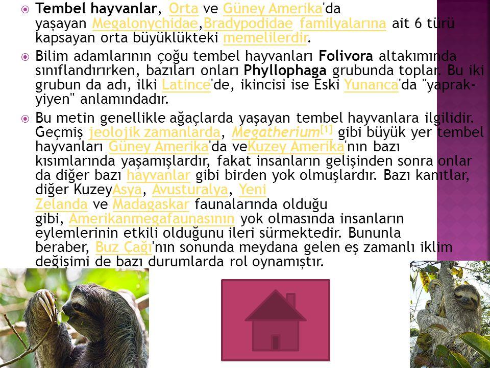  Tembel hayvanlar, Orta ve Güney Amerika'da yaşayan Megalonychidae,Bradypodidae familyalarına ait 6 türü kapsayan orta büyüklükteki memelilerdir.Orta