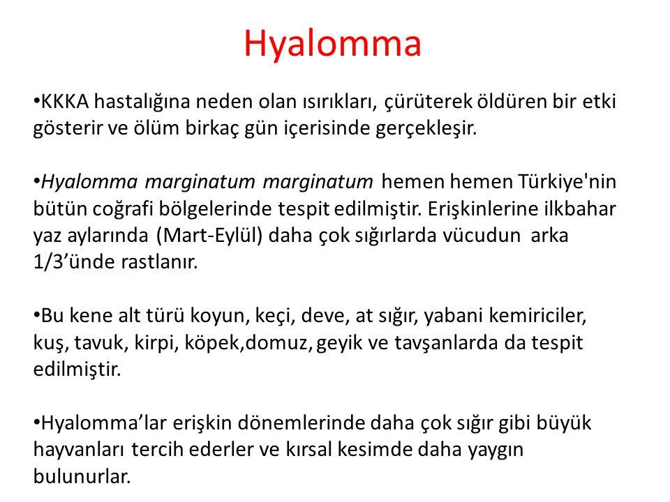 Hyalomma KKKA hastalığına neden olan ısırıkları, çürüterek öldüren bir etki gösterir ve ölüm birkaç gün içerisinde gerçekleşir. Hyalomma marginatum ma