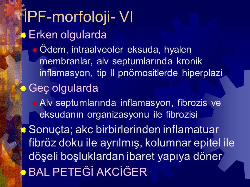 İPF-morfoloji- VI  Erken olgularda  Ödem, intraalveoler eksuda, hyalen membranlar, alv septumlarında kronik inflamasyon, tip II pnömositlerde hiperplazi  Geç olgularda  Alv septumlarında inflamasyon, fibrozis ve eksudanın organizasyonu ile fibrozisi  Sonuçta; akc birbirlerinden inflamatuar fibröz doku ile ayrılmış, kolumnar epitel ile döşeli boşluklardan ibaret yapıya döner  BAL PETEĞİ AKCİĞER