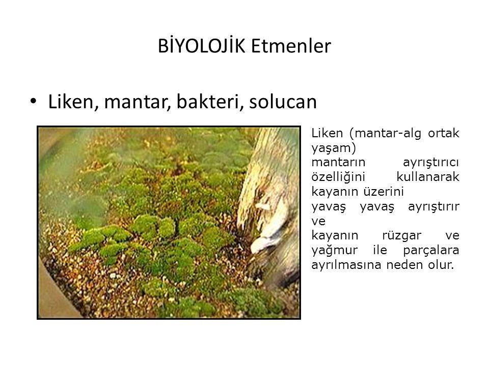 BİYOLOJİK Etmenler Liken, mantar, bakteri, solucan Liken (mantar-alg ortak yaşam) mantarın ayrıştırıcı özelliğini kullanarak kayanın üzerini yavaş yav