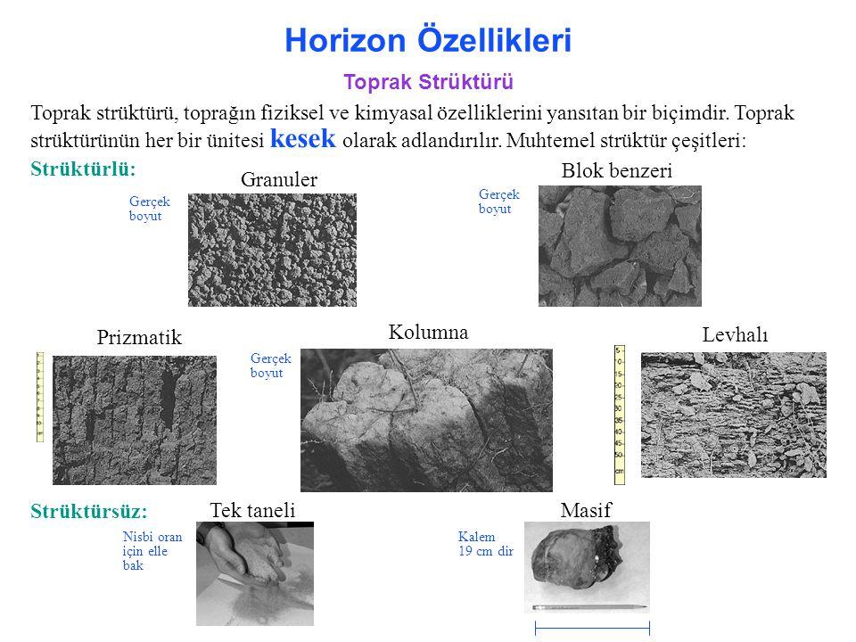 Horizon Özellikleri Toprak Strüktürü Toprak strüktürü, toprağın fiziksel ve kimyasal özelliklerini yansıtan bir biçimdir. Toprak strüktürünün her bir