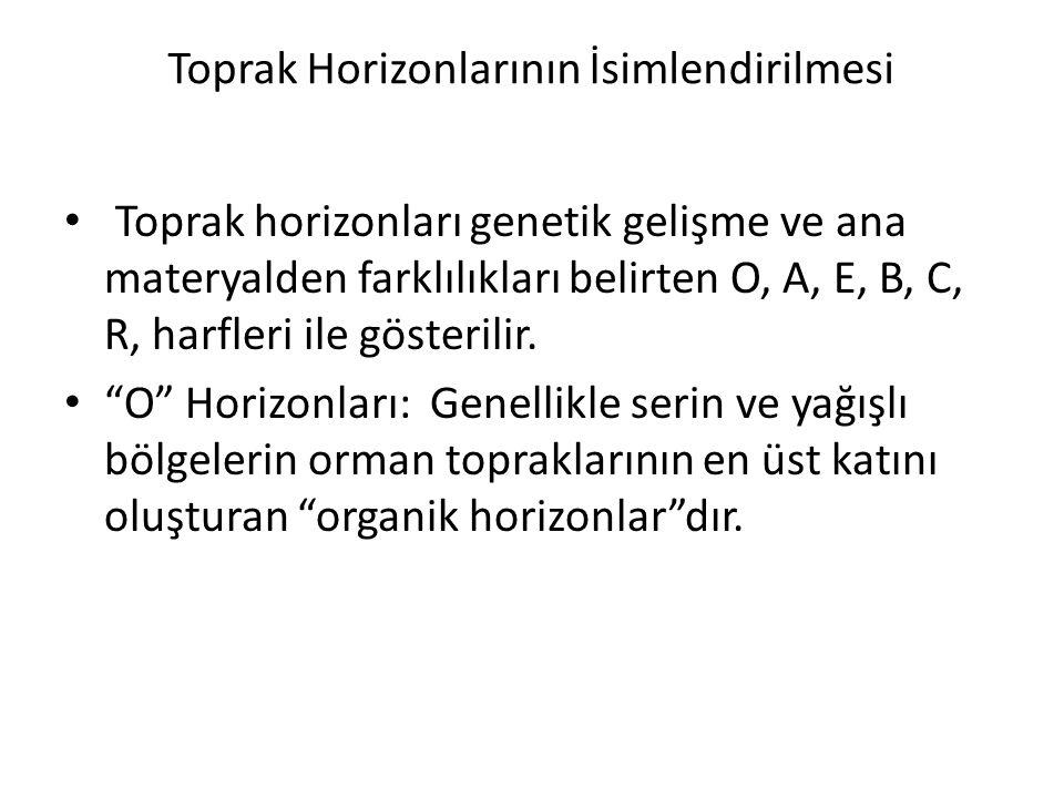 Toprak Horizonlarının İsimlendirilmesi Toprak horizonları genetik gelişme ve ana materyalden farklılıkları belirten O, A, E, B, C, R, harfleri ile gös