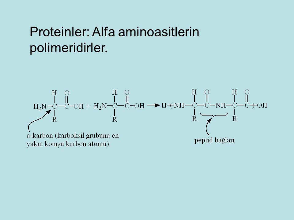 Proteinler: Alfa aminoasitlerin polimeridirler.