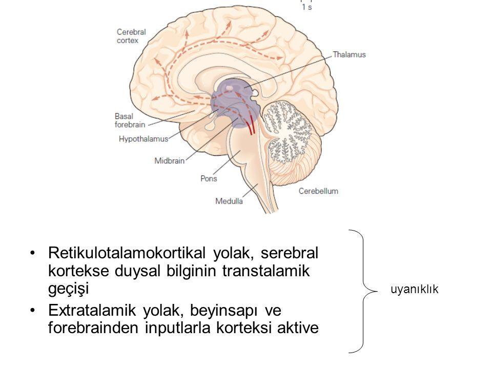 Retikulotalamokortikal yolak, serebral kortekse duysal bilginin transtalamik geçişi Extratalamik yolak, beyinsapı ve forebrainden inputlarla korteksi