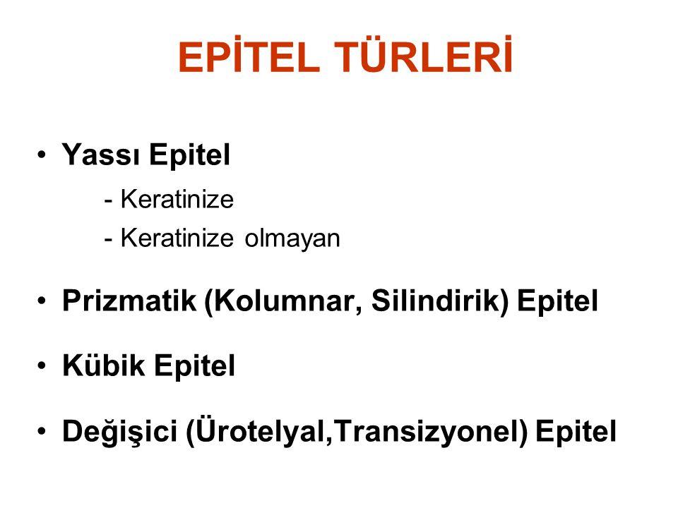 EPİTEL TÜRLERİ Yassı Epitel - Keratinize - Keratinize olmayan Prizmatik (Kolumnar, Silindirik) Epitel Kübik Epitel Değişici (Ürotelyal,Transizyonel) Epitel