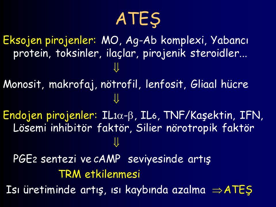 ATEŞ Eksojen pirojenler: MO, Ag-Ab komplexi, Yabancı protein, toksinler, ilaçlar, pirojenik steroidler...  Monosit, makrofaj, nötrofil, lenfosit, Gli