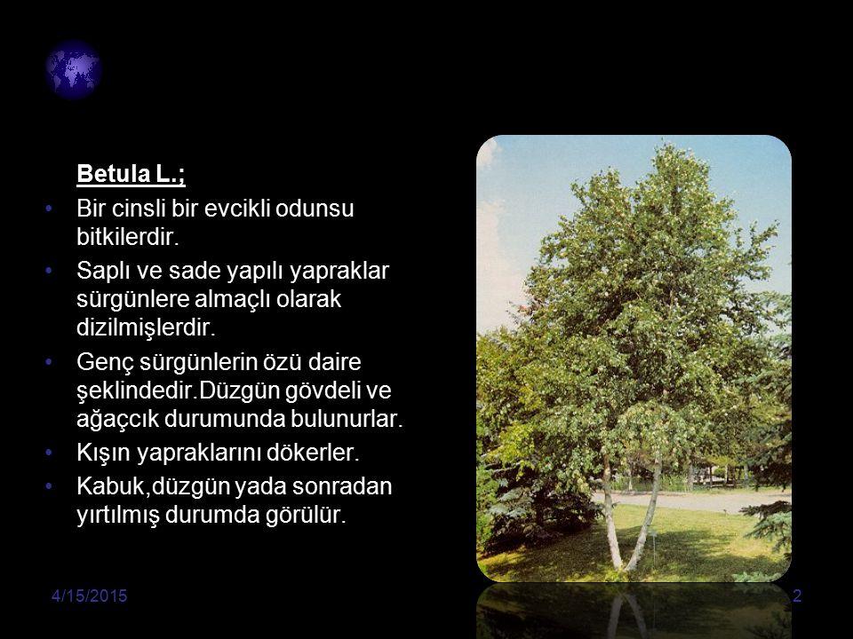 2 Betula L.; Bir cinsli bir evcikli odunsu bitkilerdir.