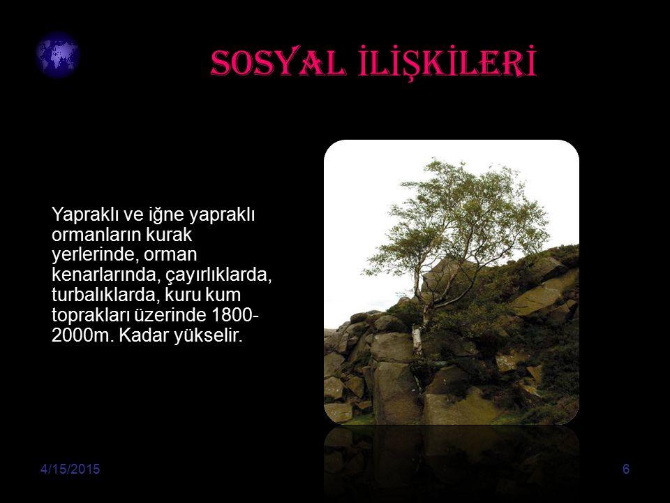 SOSYAL İ L İŞ K İ LER İ 4/15/20156 Yapraklı ve iğne yapraklı ormanların kurak yerlerinde, orman kenarlarında, çayırlıklarda, turbalıklarda, kuru kum toprakları üzerinde 1800- 2000m.