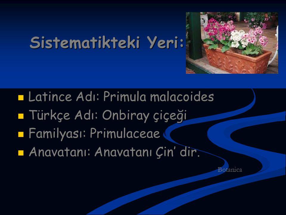 Sistematikteki Yeri: Latince Adı: Primula malacoides Latince Adı: Primula malacoides Türkçe Adı: Onbiray çiçeği Türkçe Adı: Onbiray çiçeği Familyası: