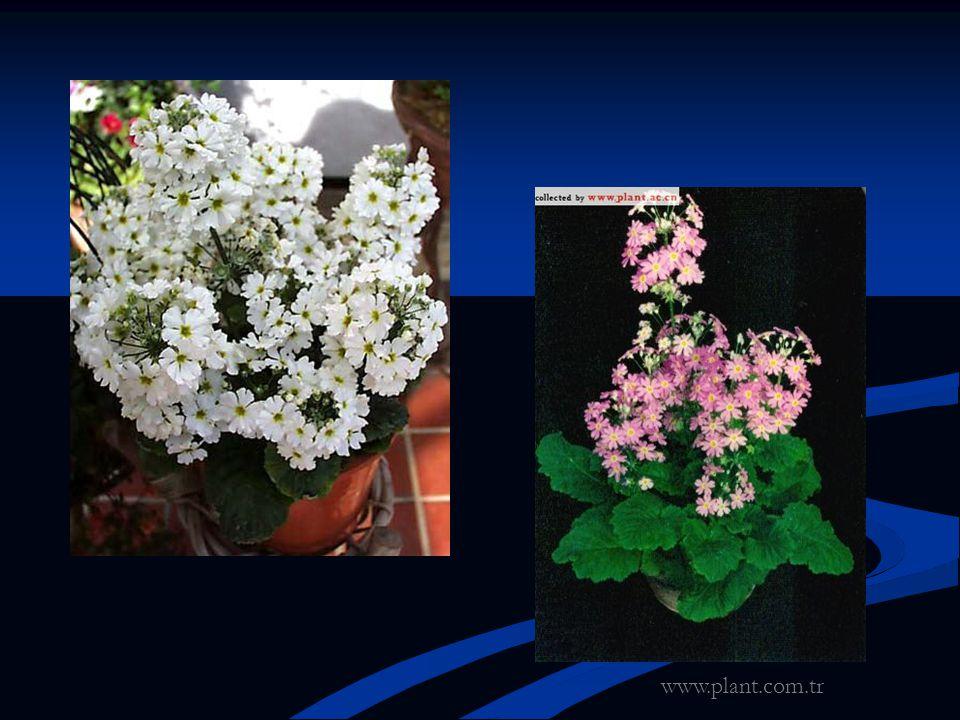 www.plant.com.tr