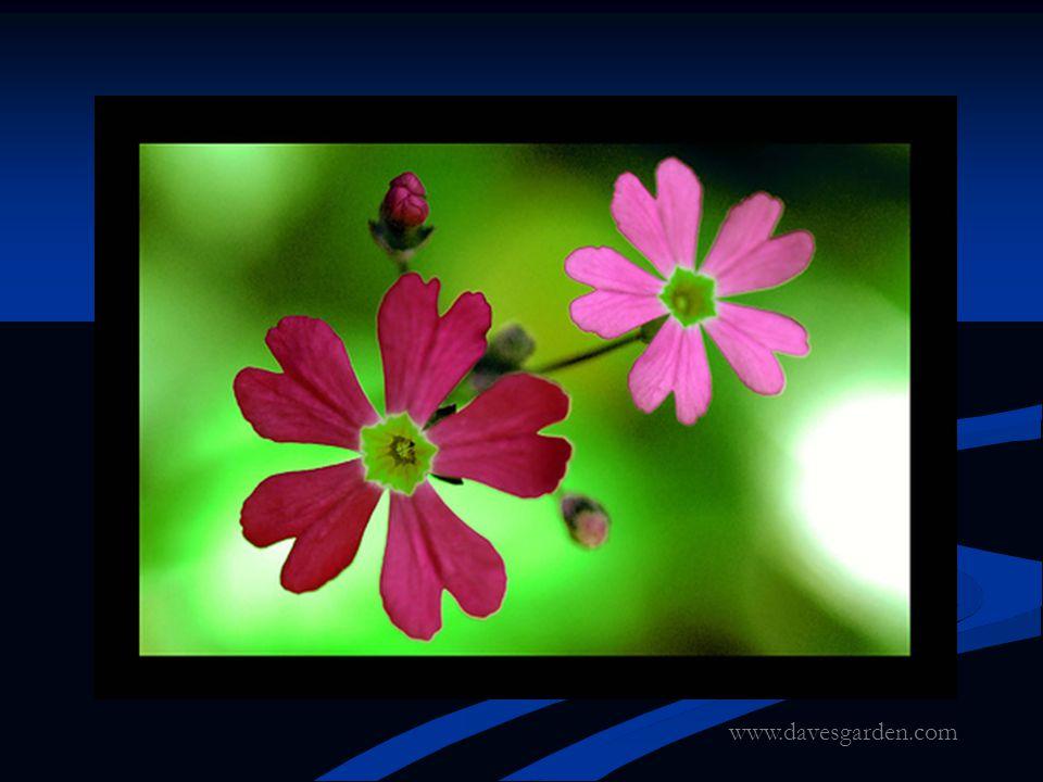 www.davesgarden.com