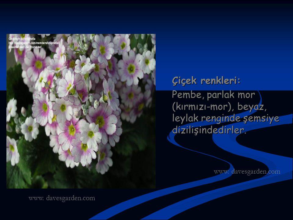 Çiçek renkleri: Pembe, parlak mor (kırmızı-mor), beyaz, leylak renginde şemsiye dizilişindedirler. www. davesgarden.com