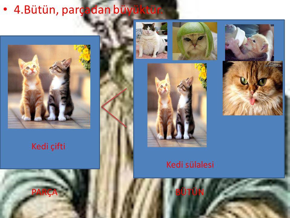 4.Bütün, parçadan büyüktür. Kedi çifti PARÇA Kedi sülalesi BÜTÜN