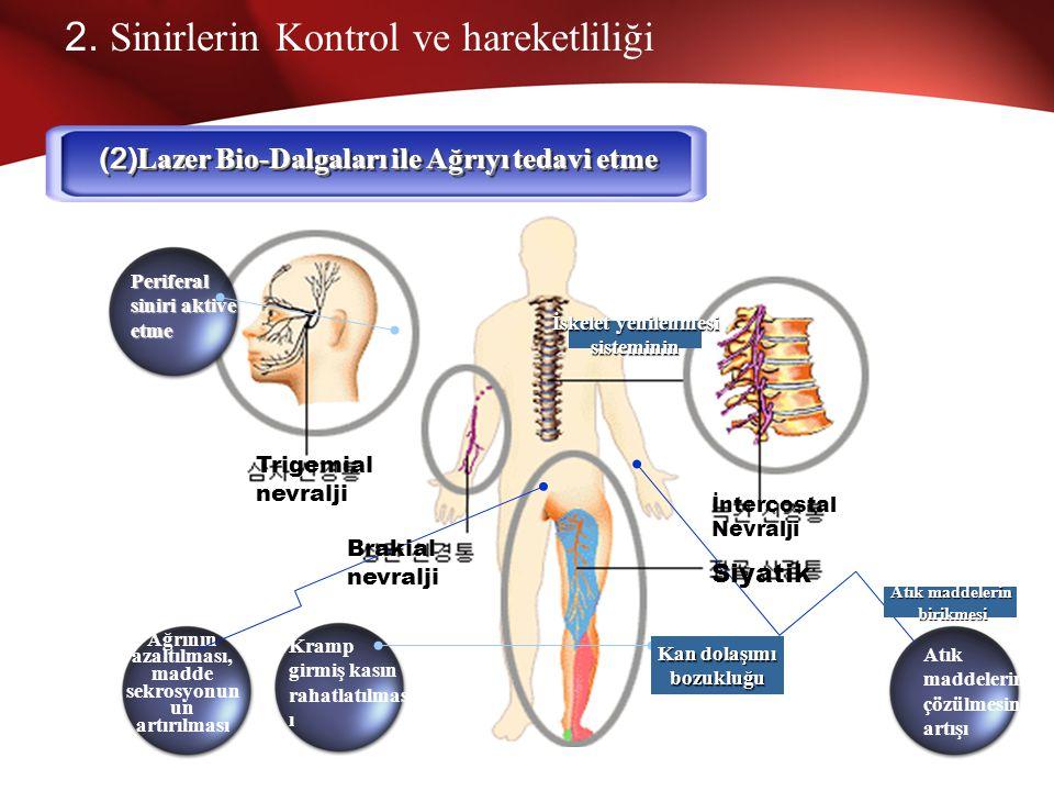 2. Sinirlerin Kontrol ve Hareketliliği (1) Lazer Bio-Dalgalarının Sinirleri Kontrol ve Hareket Ettirmesi Sinyal sistemini harekete geçirmek Beyin Hücr