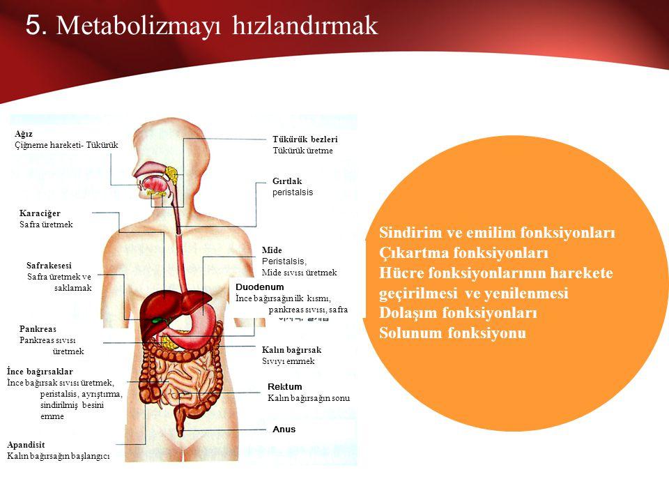 4. Kanserin Önlenmesi ve Tedavisi Kanserin Önlenmesi ve Tedavisi ◈ Vücut içindeki toksin ve zararlı atıkları yoketmek ◈ Stresi ortadan kaldırmak için