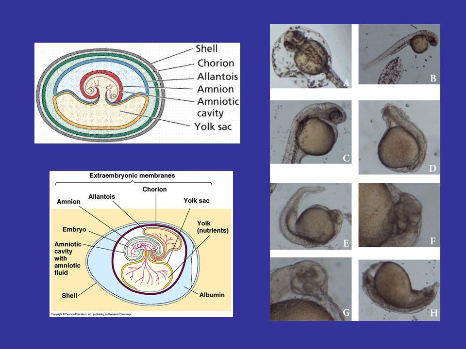 Farklı Canlı Embriyoların Gelişimi
