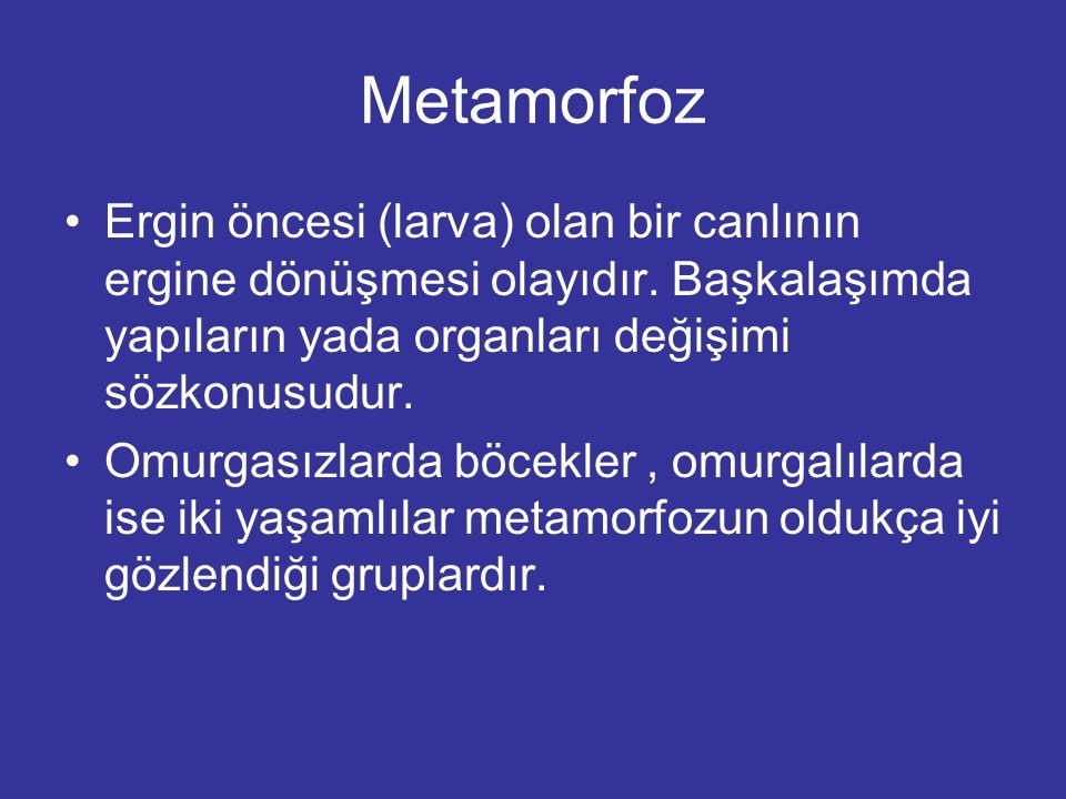 Metamorfoz Ergin öncesi (larva) olan bir canlının ergine dönüşmesi olayıdır.