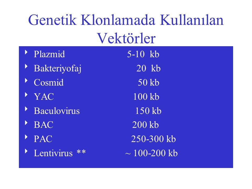 Genetik Klonlamada Kullanılan Vektörler  Plazmid 5-10 kb  Bakteriyofaj 20 kb  Cosmid 50 kb  YAC 100 kb  Baculovirus 150 kb  BAC 200 kb  PAC 250-300 kb  Lentivirus ** ~ 100-200 kb