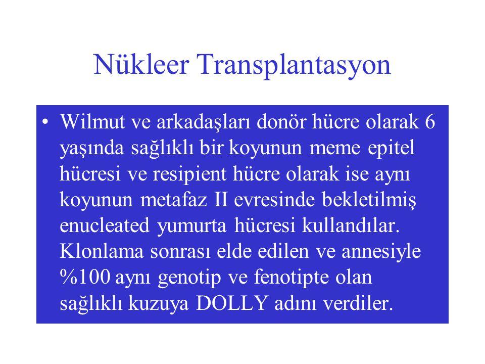 Nükleer Transplantasyon Wilmut ve arkadaşları donör hücre olarak 6 yaşında sağlıklı bir koyunun meme epitel hücresi ve resipient hücre olarak ise aynı koyunun metafaz II evresinde bekletilmiş enucleated yumurta hücresi kullandılar.