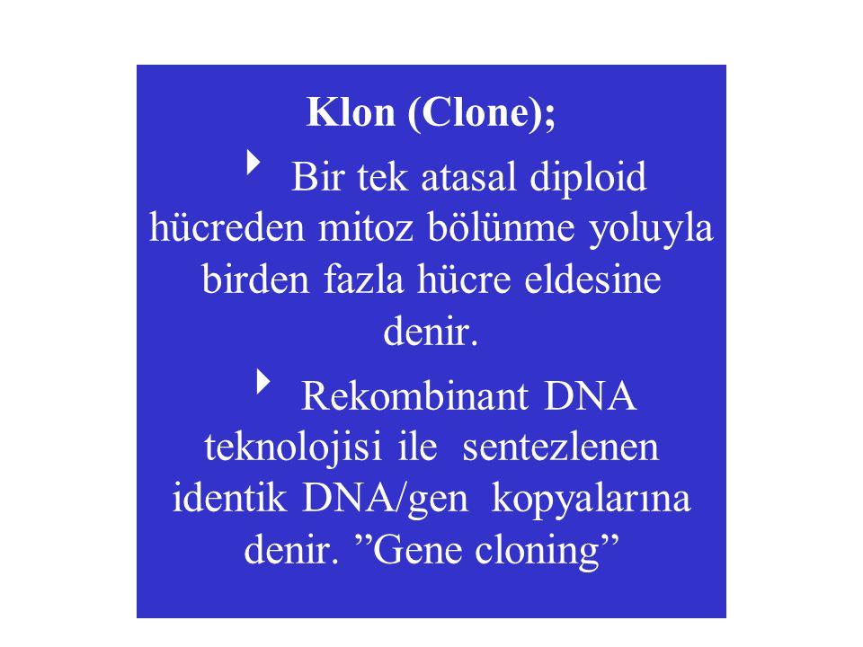 Klon (Clone);  Bir tek atasal diploid hücreden mitoz bölünme yoluyla birden fazla hücre eldesine denir.  Rekombinant DNA teknolojisi ile sentezlenen