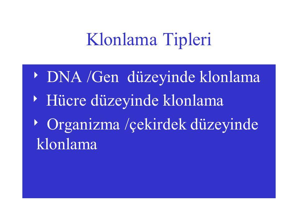 Klonlama Tipleri  DNA /Gen düzeyinde klonlama  Hücre düzeyinde klonlama  Organizma /çekirdek düzeyinde klonlama