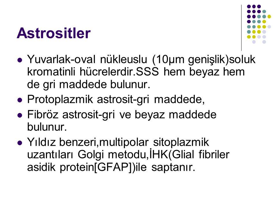 Astrositler Yuvarlak-oval nükleuslu (10µm genişlik)soluk kromatinli hücrelerdir.SSS hem beyaz hem de gri maddede bulunur. Protoplazmik astrosit-gri ma