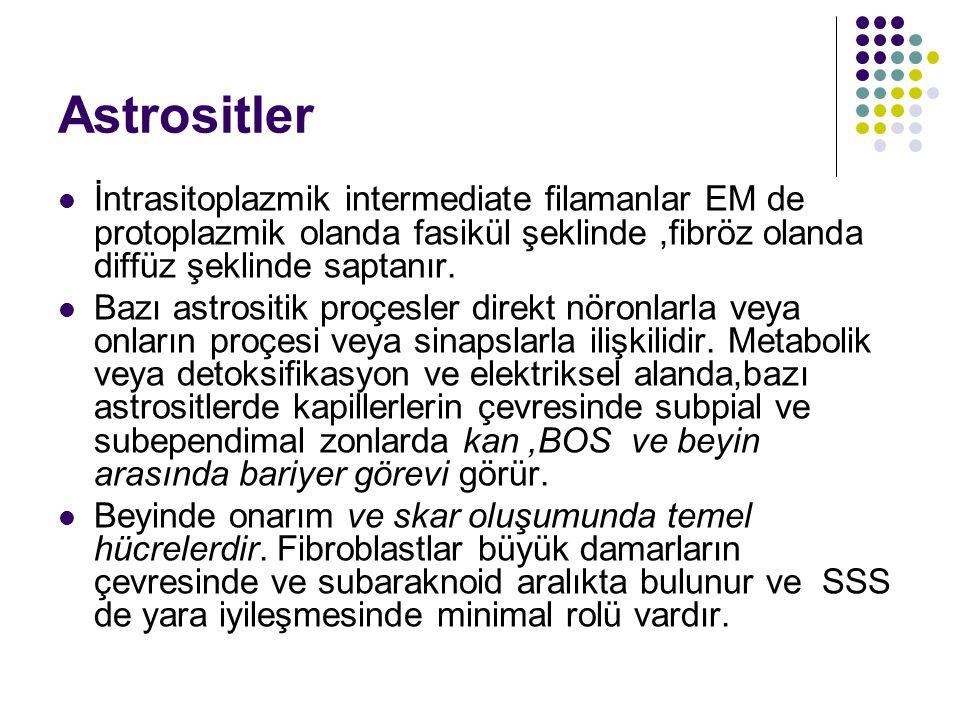 Astrositler İntrasitoplazmik intermediate filamanlar EM de protoplazmik olanda fasikül şeklinde,fibröz olanda diffüz şeklinde saptanır. Bazı astrositi