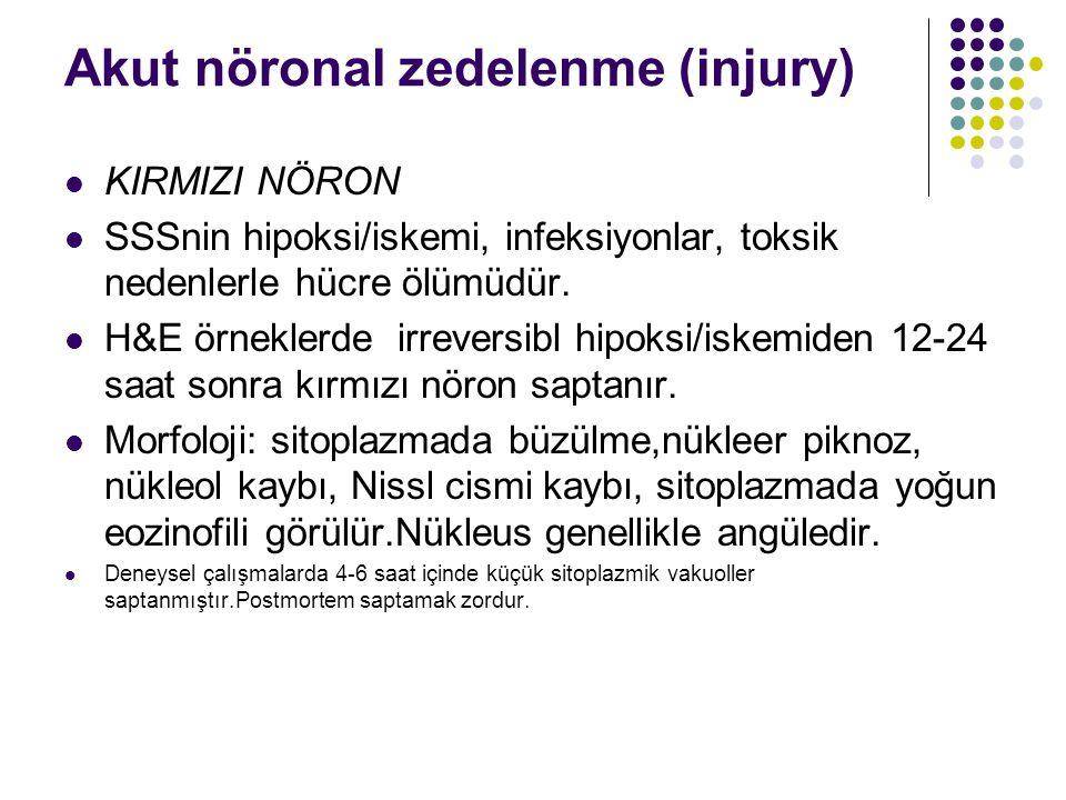Akut nöronal zedelenme (injury) KIRMIZI NÖRON SSSnin hipoksi/iskemi, infeksiyonlar, toksik nedenlerle hücre ölümüdür. H&E örneklerde irreversibl hipok