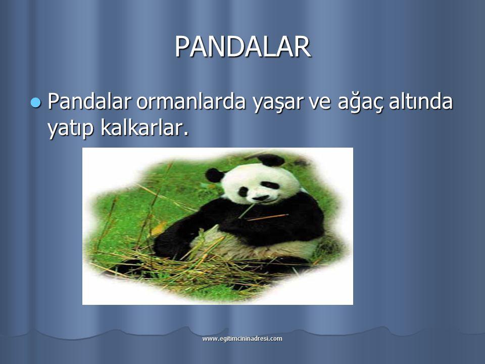PANDALAR Pandalar ormanlarda yaşar ve ağaç altında yatıp kalkarlar.