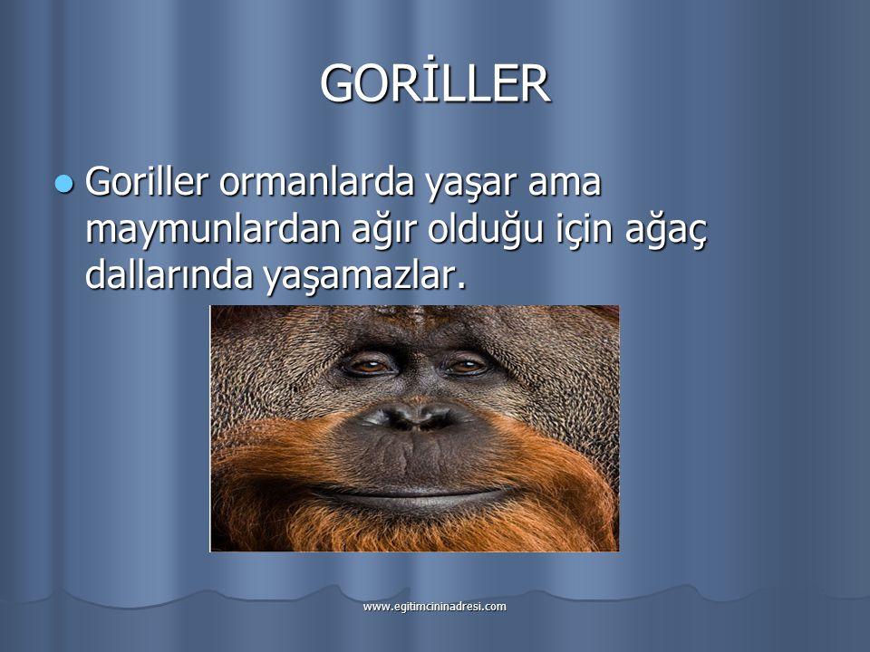 GORİLLER Goriller ormanlarda yaşar ama maymunlardan ağır olduğu için ağaç dallarında yaşamazlar.