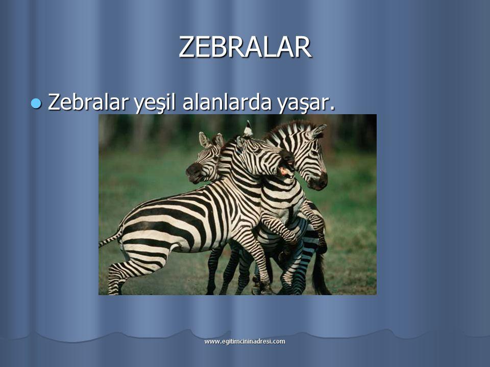 ZEBRALAR Zebralar yeşil alanlarda yaşar.
