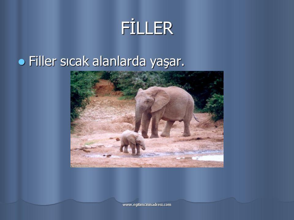 FİLLER Filler sıcak alanlarda yaşar.