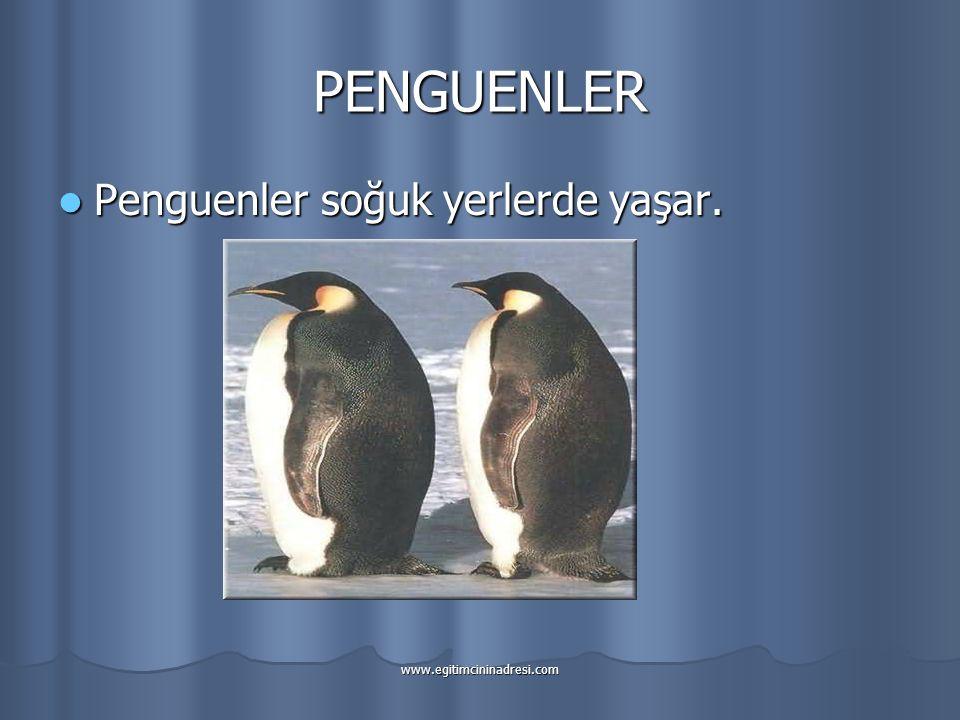 PENGUENLER Penguenler soğuk yerlerde yaşar.