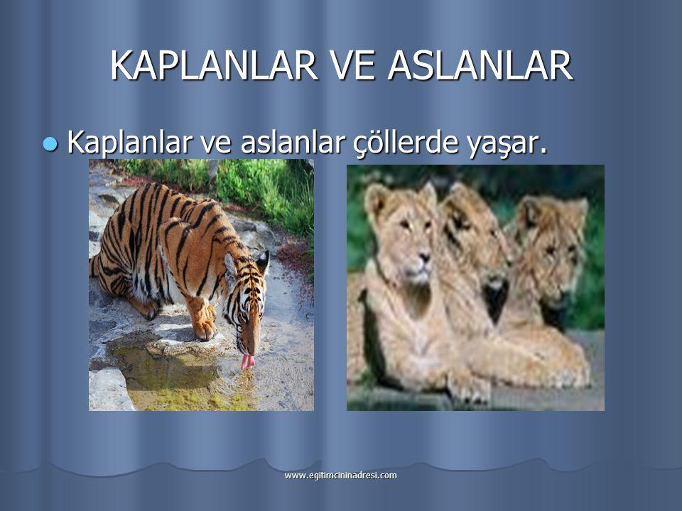 KAPLANLAR VE ASLANLAR Kaplanlar ve aslanlar çöllerde yaşar.