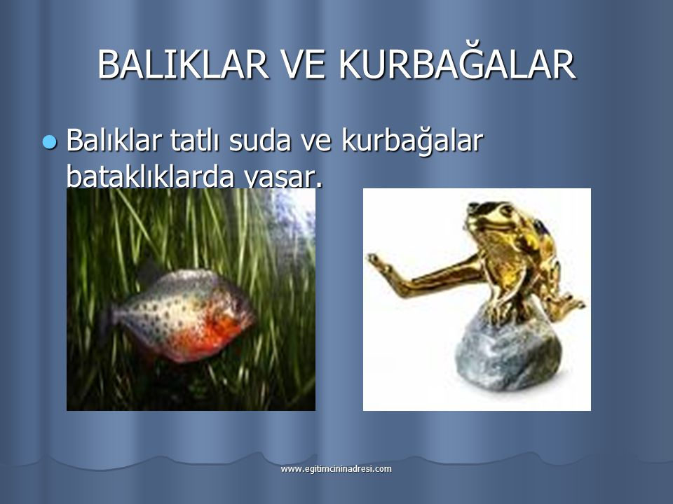 BALIKLAR VE KURBAĞALAR Balıklar tatlı suda ve kurbağalar bataklıklarda yaşar.