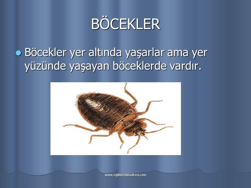BÖCEKLER Böcekler yer altında yaşarlar ama yer yüzünde yaşayan böceklerde vardır.