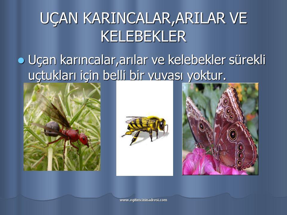 UÇAN KARINCALAR,ARILAR VE KELEBEKLER Uçan karıncalar,arılar ve kelebekler sürekli uçtukları için belli bir yuvası yoktur.
