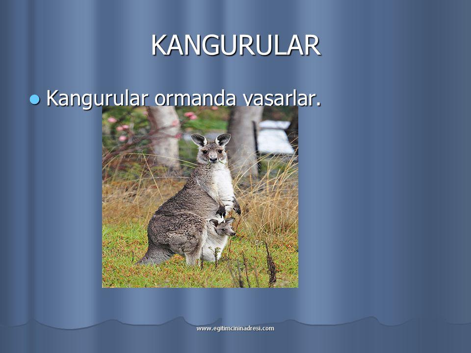 KANGURULAR Kangurular ormanda yaşarlar.