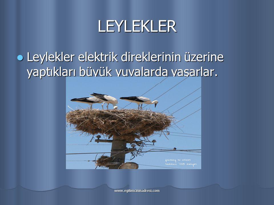 LEYLEKLER Leylekler elektrik direklerinin üzerine yaptıkları büyük yuvalarda yaşarlar.
