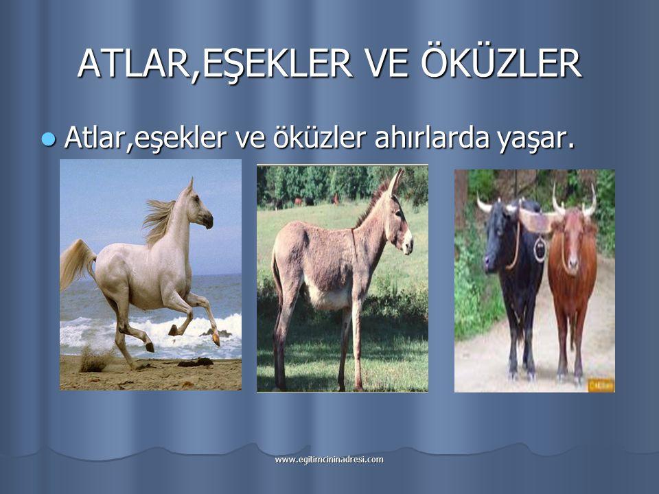 ATLAR,EŞEKLER VE ÖKÜZLER Atlar,eşekler ve öküzler ahırlarda yaşar.